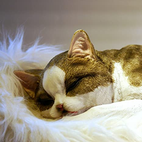 Gato Gatos tumbado durmiendo lebensecht Jardín Decoración Animales figuras