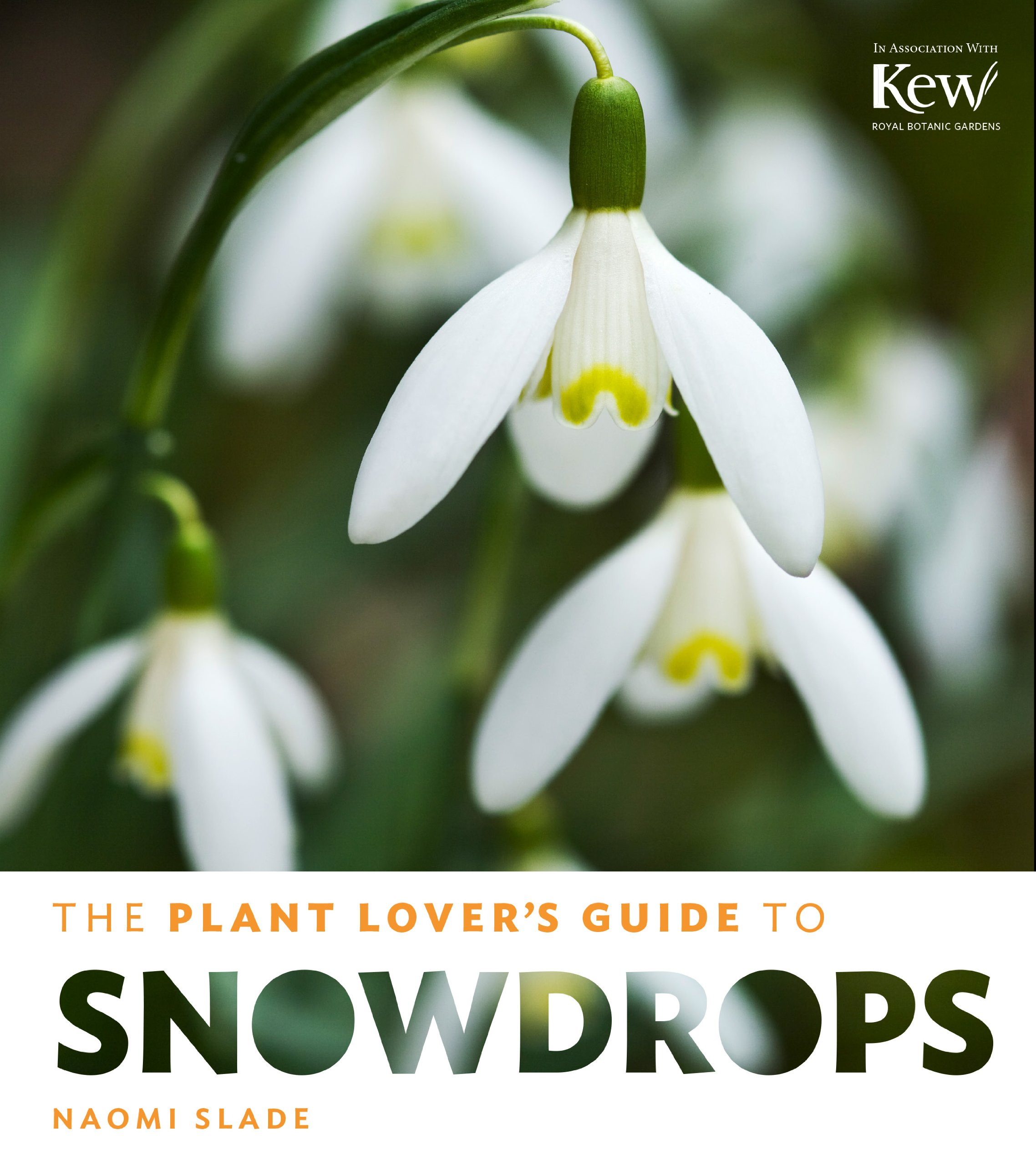The Plant Lover S Guide To Snowdrops The Plant Lover S Guides