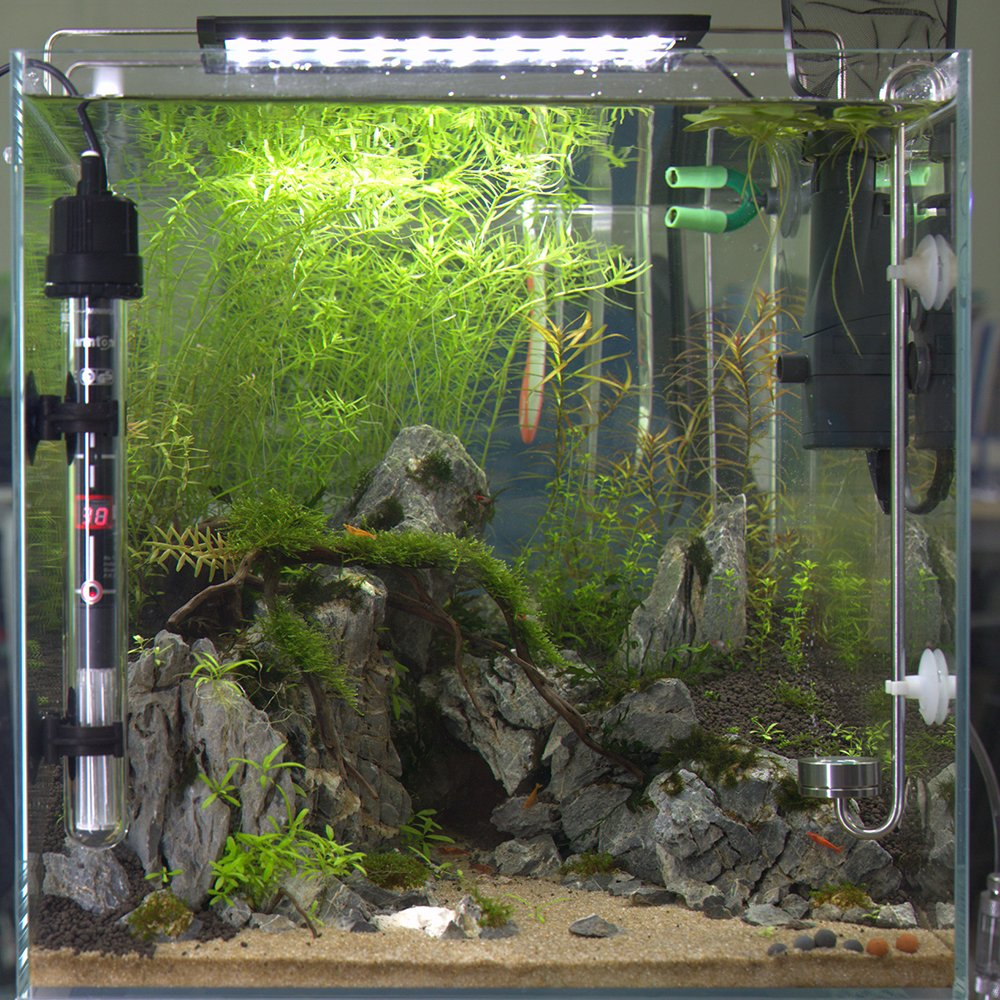 Temperatura ajustable del tanque de pescados del calentador del acuario de la zambullida con el elemento digital del termómetro de la calefacción del LED, ...