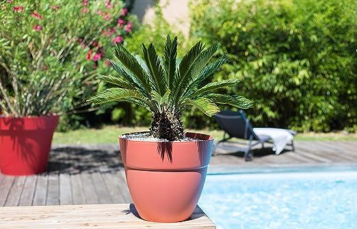 Eda Plastiques macetero Redondo Cancun, Capucine: Amazon.es: Jardín