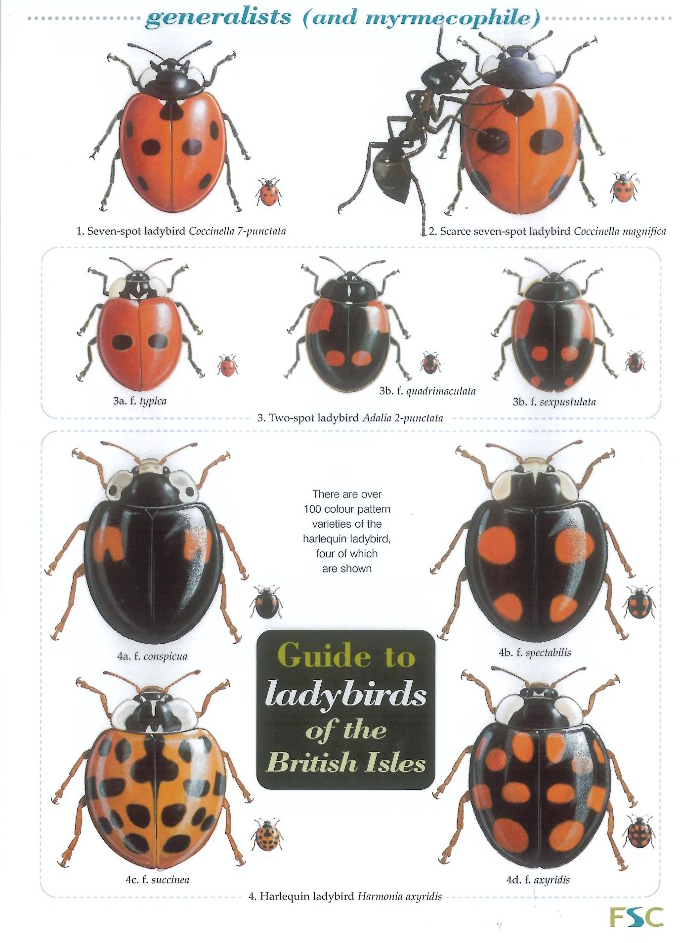 Guide to Ladybirds of the British Isles ebook