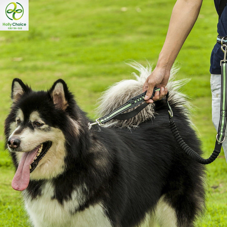 HollyChoice Correa para Perro con Cuerda el/ástica de Manos Libres; Correa para Perros c/ómoda y Segura para Correr o Caminar