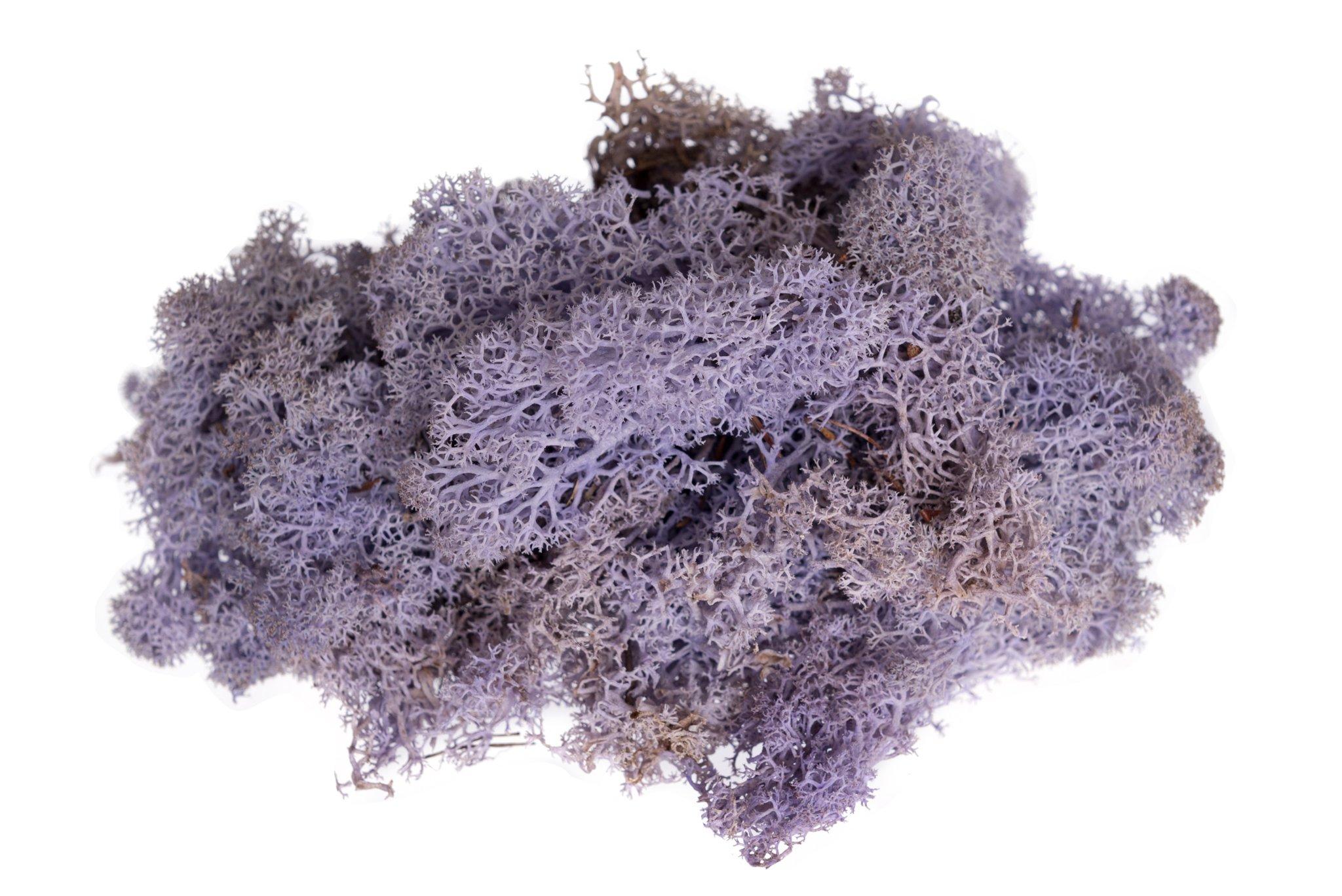Hinterland Trading Soft Reindeer Moss, 3-Ounce (Lavender)