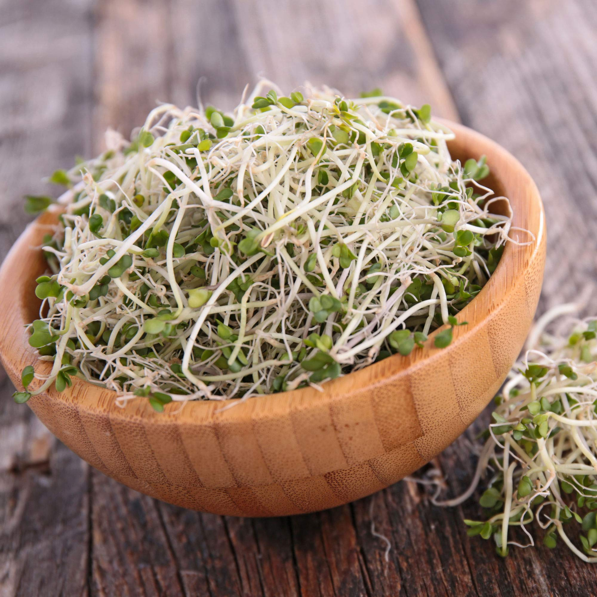 Organic Broccoli Sprouting Seeds By Handy Pantry | 5 Pound Resealable Can | Bulk Non-GMO Broccoli Sprouts Seeds, Contain Sulforaphane by Handy Pantry (Image #3)