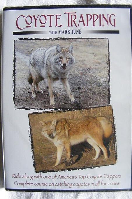 Amazon.com: Coyote Captura con Mark de junio de DVD: Sports ...