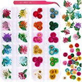 2 Boxes Dried Flowers for Nail Art, KISSBUTY 24 Colors Dry Flowers Mini Real Natural Flowers Nail Art Supplies 3D Applique Nail Decoration Sticker for Tips Manicure Decor (Flowers Daisy)