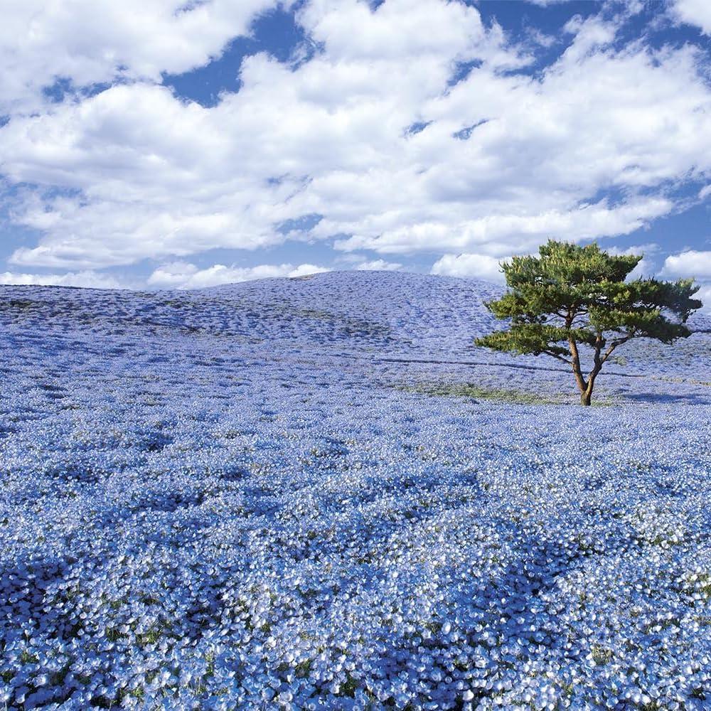 絶景 Ipad壁紙 ネモフィラの咲く丘 その他 スマホ用画像112401