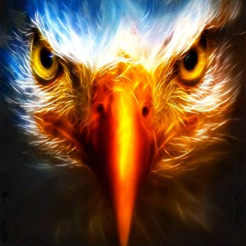 Eagle Live Wallpaper Free