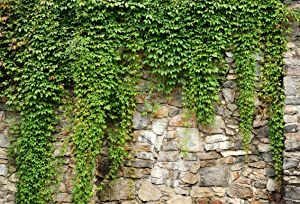 Leyiyi 10x8ft Spring Garden Leaves Backdrop Gardening Plants Grunge Stone Wall Greenery Banner Vane Branch Cover Vintage Architecture Photo Background Wedding Kids Birthday Photo Studio Vinyl Prop