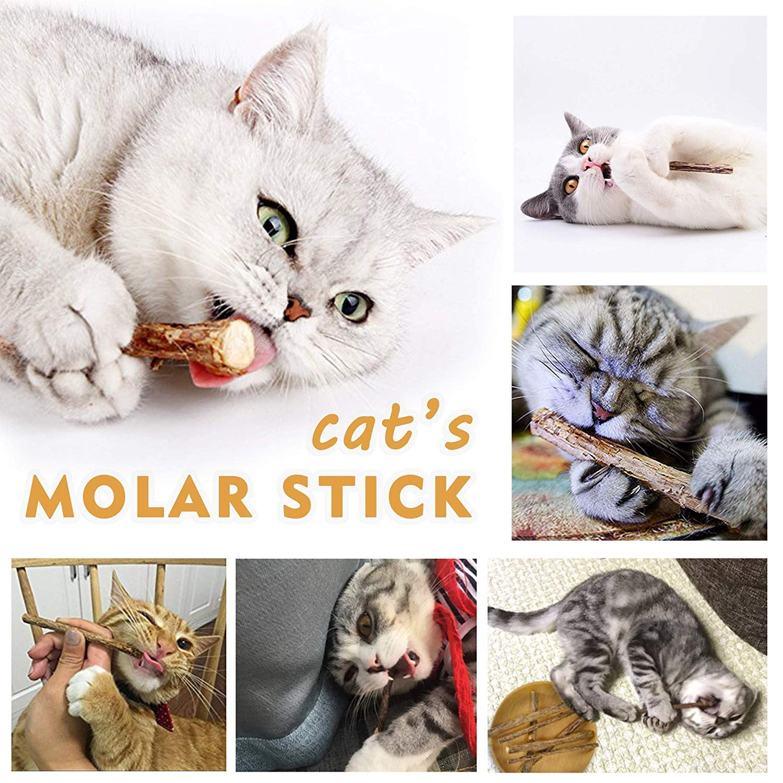 Natural Matatabi Silvervine Sticks 40 Roots Chew Sticks Cleaning Teeth Molar Tools Kitten Cat Chew Toy Natural Catnip Mouse Cat Toy Ximalay Cat Catnip Sticks