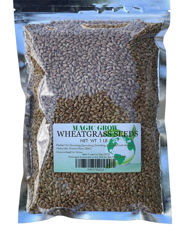 Guaranteed to Grow Rex Products Wheatgrass Seed 1lb Non-GMO Magic Grow Wheatgrass