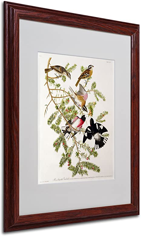 Amazon Com Rose Breasted Grosbeak Matted Artwork By John James Audubon With Wood Frame 16 By 20 Inch Wall Art