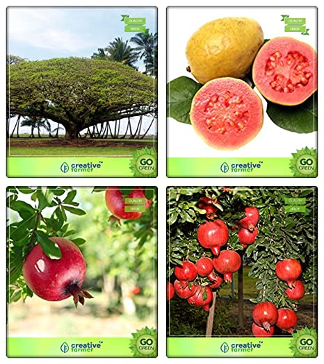 Creative Farmer Seeds Of Trees For Garden Divi-Divi,Guava