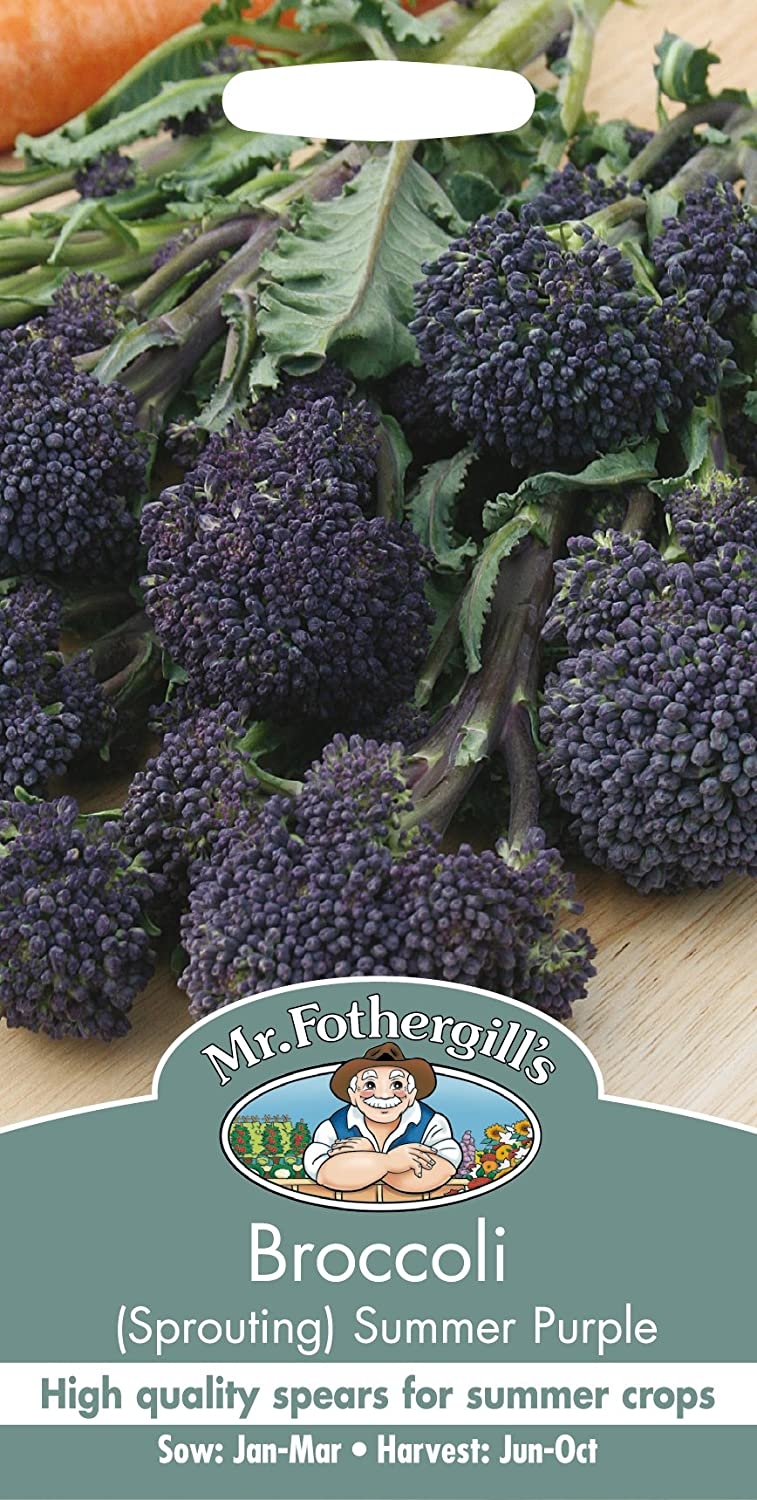 Mr Fothergill's 12062 BROCCOLI (Sprouting) Summer Purple Seeds Mr Fothergill?s Seeds Ltd GF4543