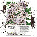 100 Seeds, Common Valerian (Valeriana officinalis) Seeds by Seed Needs