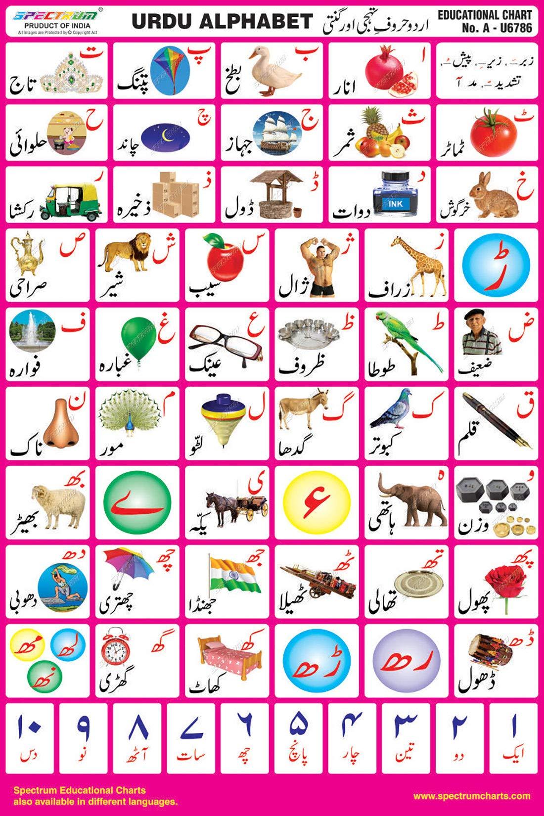 Spectrum Mirror Coat Educational Charts Set of 5 : Set 12 English