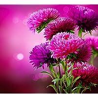 Kraft Seeds Aster Flower KS Spl Mix GMO-Free Seeds