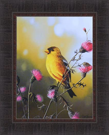 Amazon.com: American Goldfinch by Jim Hansel 17x21 Yellow Finch Bird Wildlife Framed Art Print Wall Décor Picture: Posters & Prints