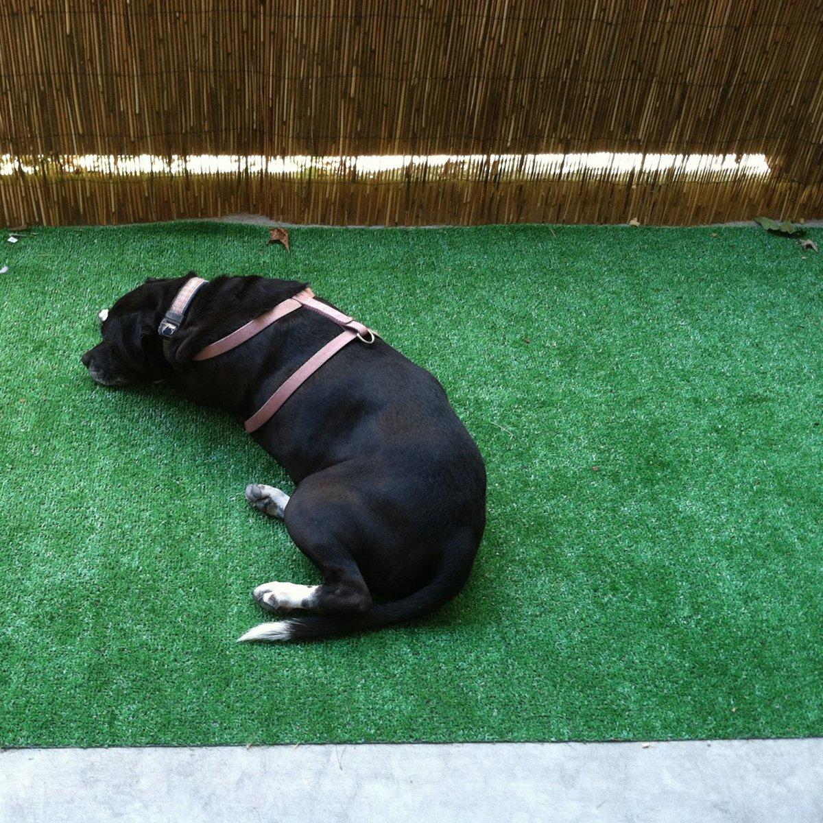 Amazon.com: Synturfmats Green Artificial Grass Carpet Rug - Indoor ...
