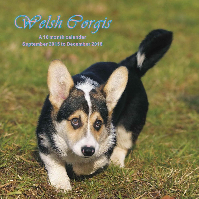 Welsh Corgis Calendar - 2016 Wall calendars - Dog Calendars - Monthly Wall Calendar by Magnum pdf