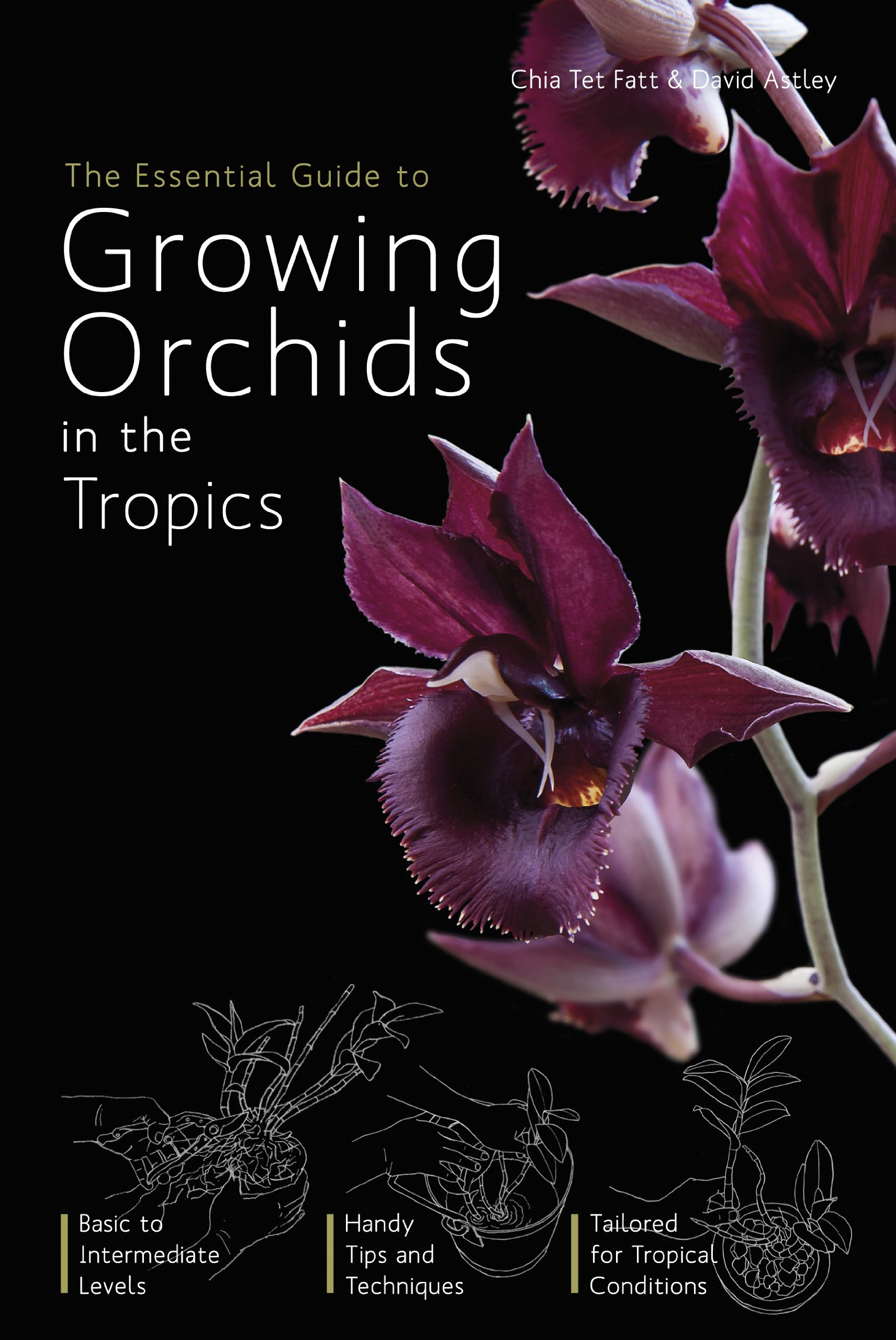 The Essential Guide to Growing Orchids in the Tropics: Tet Fatt Chia:  9789814351393: Amazon.com: Books