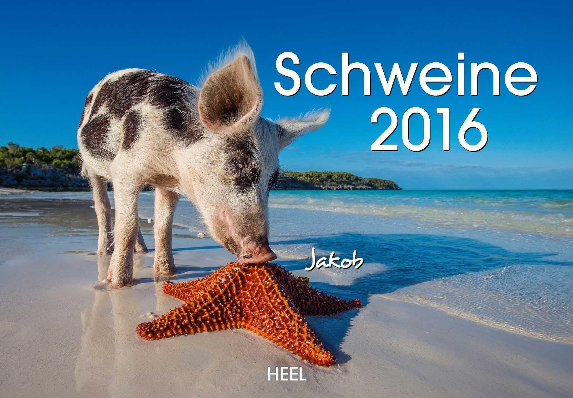 Schweine 2016