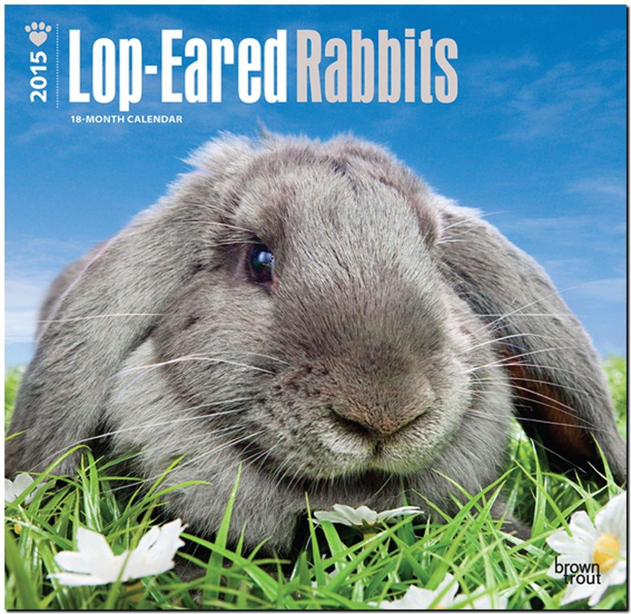 Lop-eared Rabbits 2015 - Kaninchen mit Hängeohren - Widderkaninchen