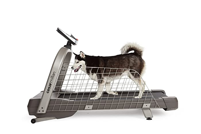 Dog Exercise: Treadmill