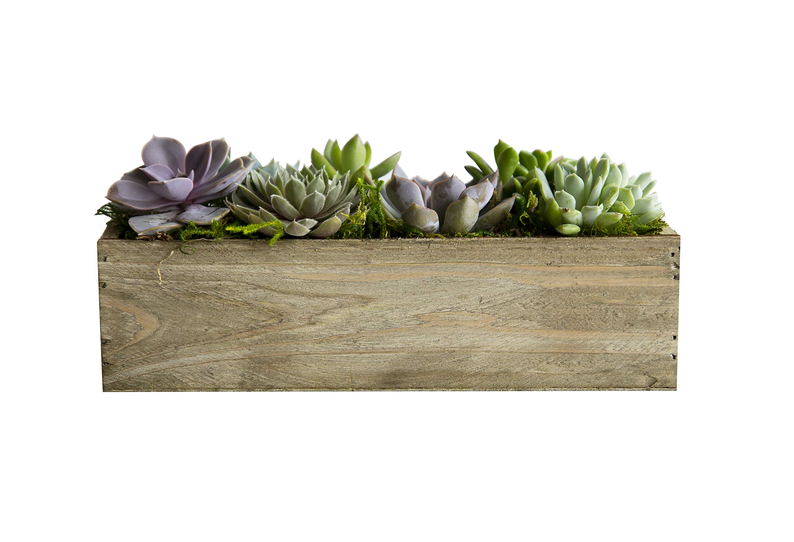Hallmark Flowers Succulent Garden In 10-Inch Wood Trough by Hallmark Flowers