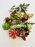 10 Assorted Live Succulent Cuttings Varieties Beginners Succulents, No 2 Cuttings Alike, Great for Terrariums, Mini Gardens, and as Starter Plants