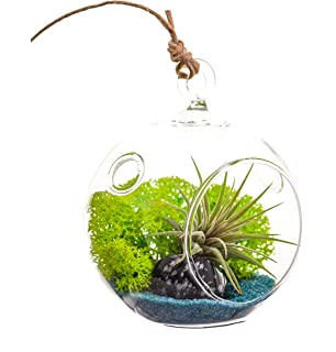 Amazon Com Bliss Gardens Air Plant Terrarium Kit With 7 Teardrop