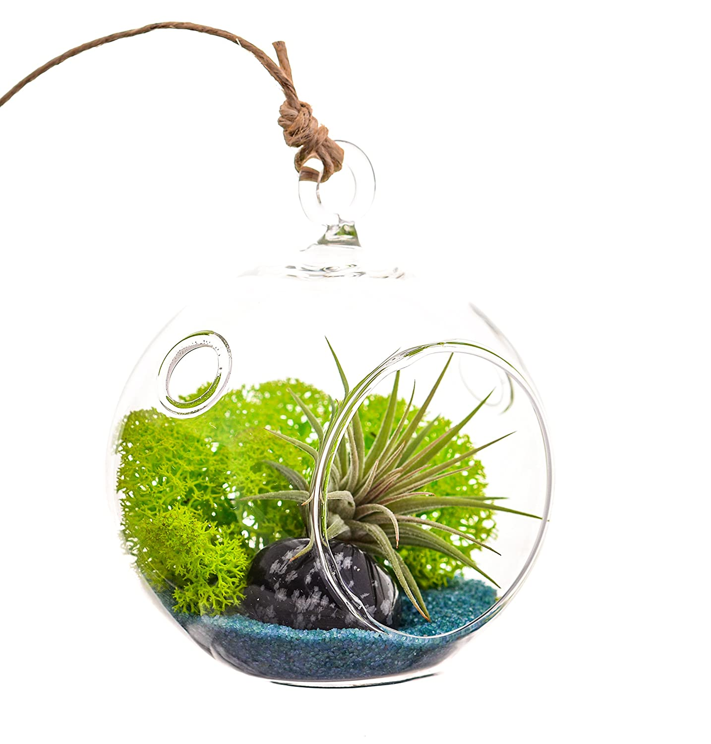 Bliss Gardens Mini Air Plant Terrarium Kit with 3 Glass Turquoise Sand, Green Moss and Snowflake Obsedian Stone
