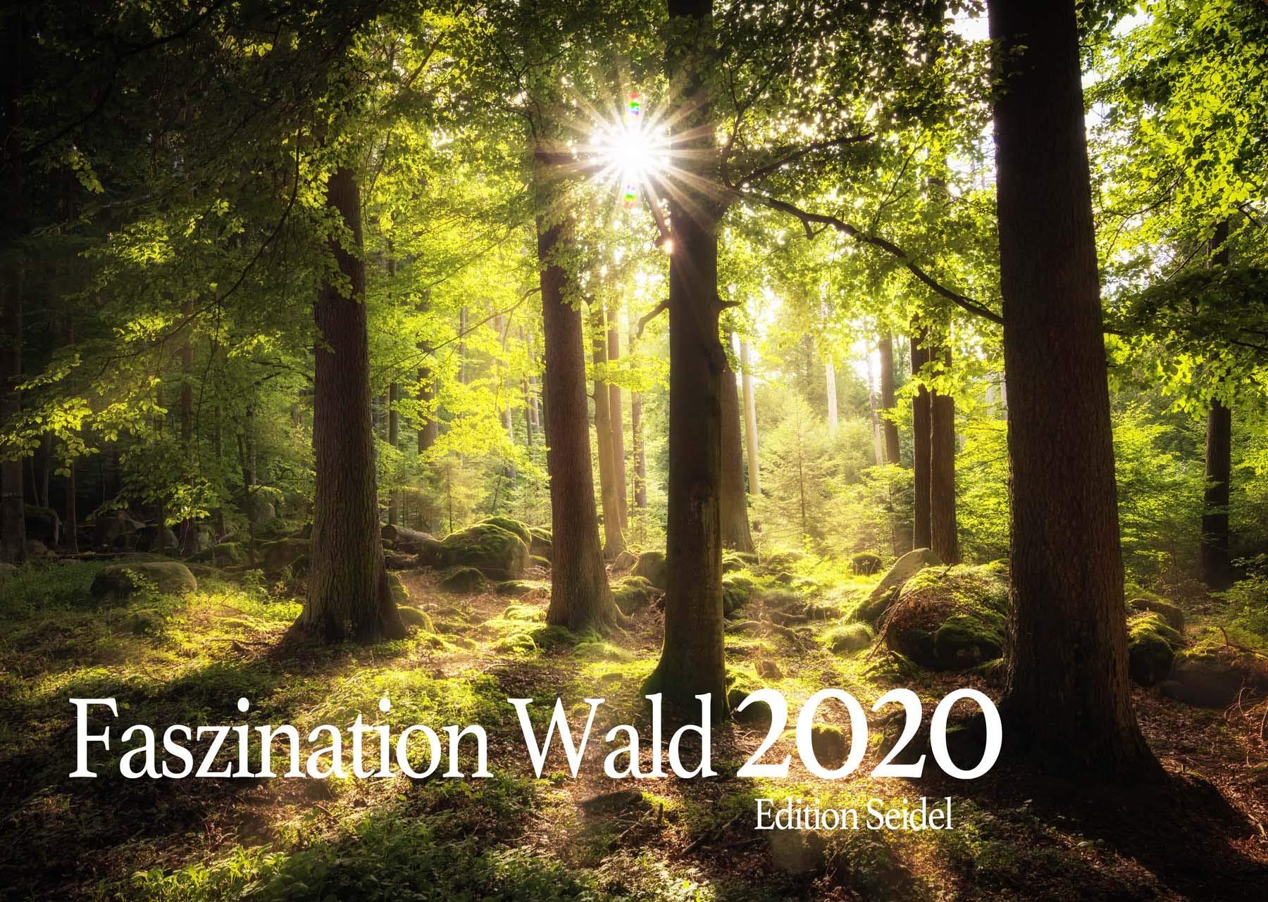 Edition Seidel Faszination Wald Premium Kalender 2020 DIN A3 Wandkalender Natur