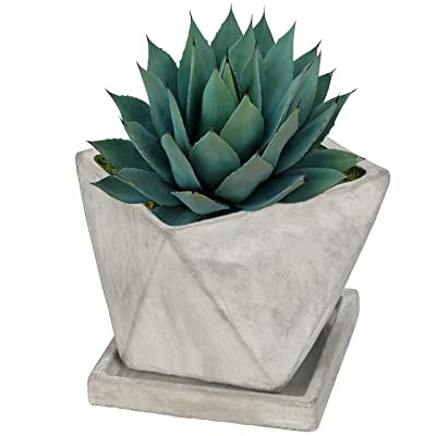 5-Inch Mini Gray Concrete Geometric Design Succulent Cacti Planter Pot with Removable Saucer : Garden & Outdoor