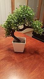 Amazon.com: Artificial Plants Guest Greeting Pine Bonsai
