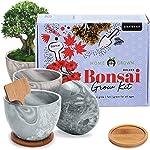 Deluxe 4 Bonsai Grow Kit - Complete Sacred Bonsai Tree Kit