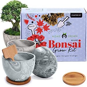 Deluxe 4 Bonsai Grow Kit - Complete Sacred Bonsai Tree Kit w/Indoor Seed Starter, Soil, Planter Pots, Drip Trays & Bonsai Tool Kit - Fig, Japanese Maple & Privet, Rockspray Cotoneaster Trees Garden