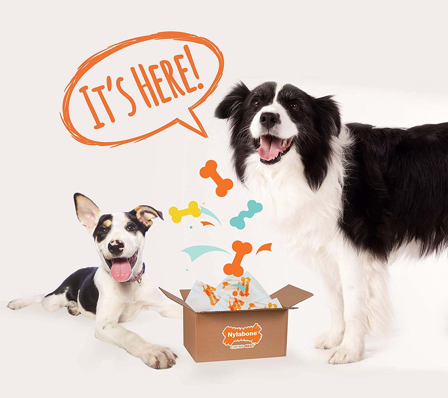 Giant Nylabone Power Chew Extreme Chewing 4-Piece Dog Toy Surprise Box Variety