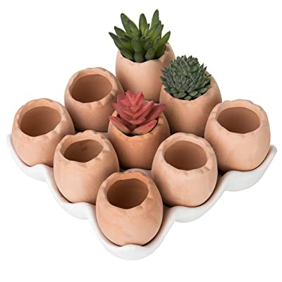 MyGift Adorable Set of 9 Brown Eggs Design Ceramic Succulent Planters/Mini Decorative Pots w/Tray: Garden & Outdoor