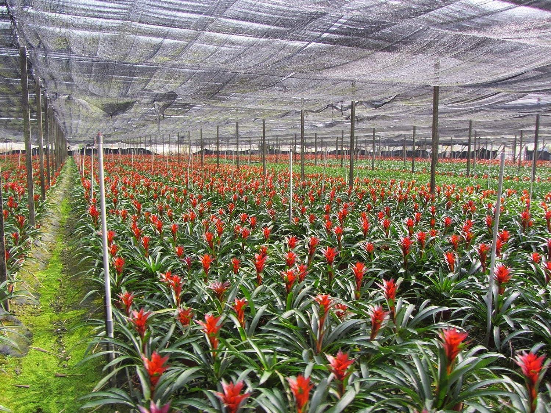MADAME GROW Fertilizante O ABONO ORGÁNICO para Plantas Bellies Kit ...