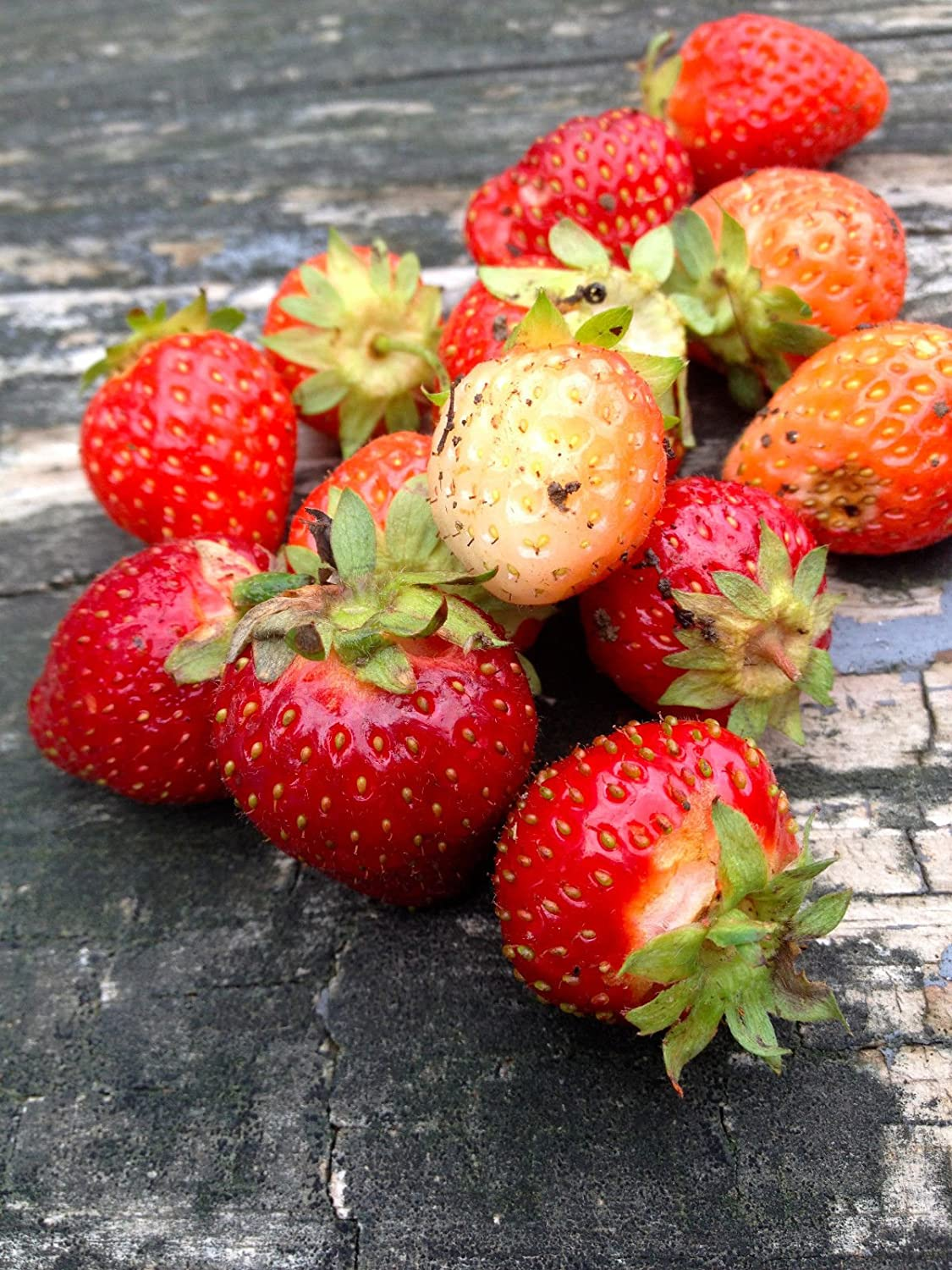 30 Super Sweet Strawberry Everbearing Plant Seeds