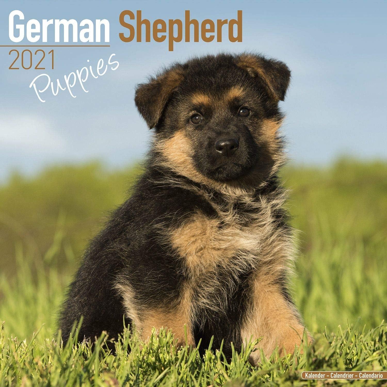 Amazon.: German Shepherd Puppies Calendar 2021   Dog Breed