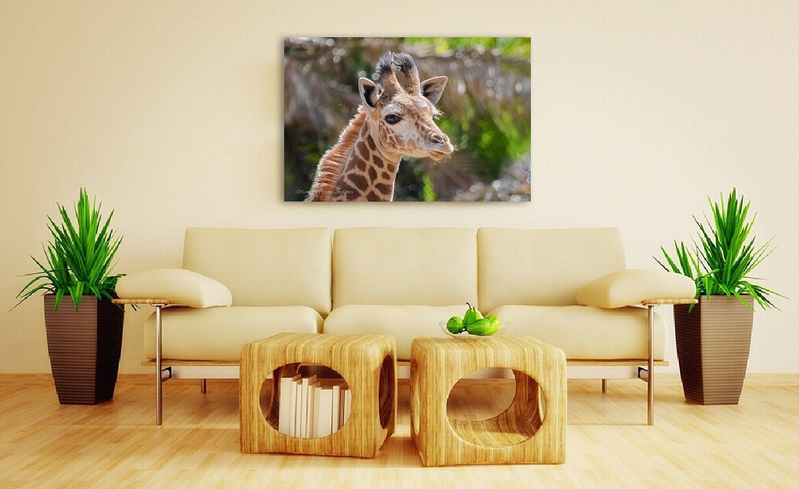 Newborn Animal Art Print on CANVAS Giraffe Photo Safari Nursery Wall Decor Baby Shower Gift Sweet Portrait Photography Ready to Hang 8x10 8x12 11x14 12x18 16x20 16x24 20x30 24x36
