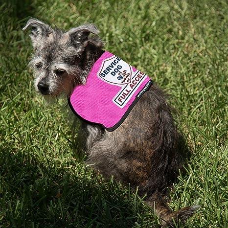 Amazoncom Premium Service Dog Vest For Smaller Service Dogs