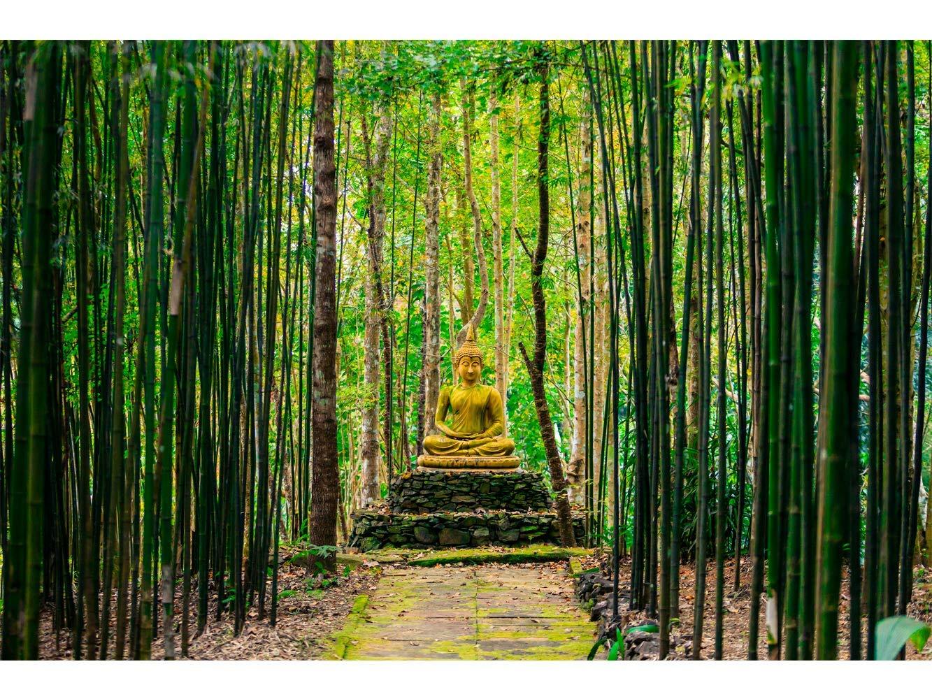 Oedim Fototapete Wand Buddha im Bambuswald | Verschiedene Maße 350 x 250 cm | Dekor Esszimmer, Wohnzimmer, Zimmer