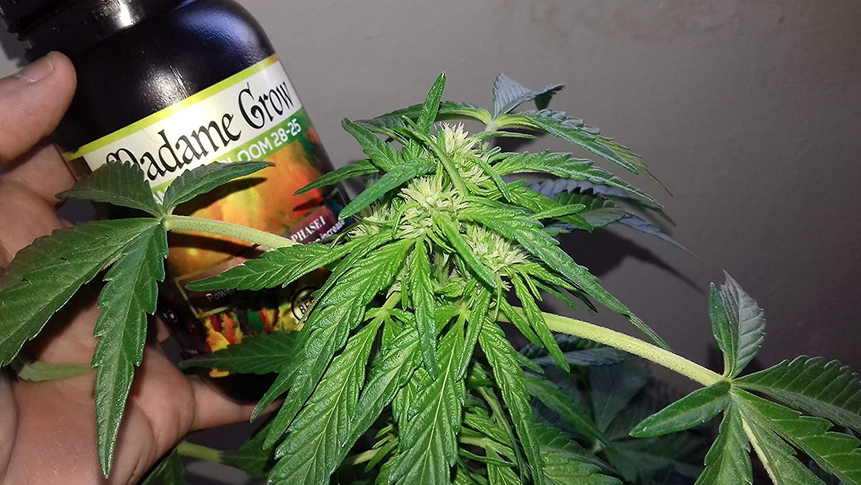 MADAME GROW 1 litro FLORACIÓN Marihuana 🍀 Mejor ...