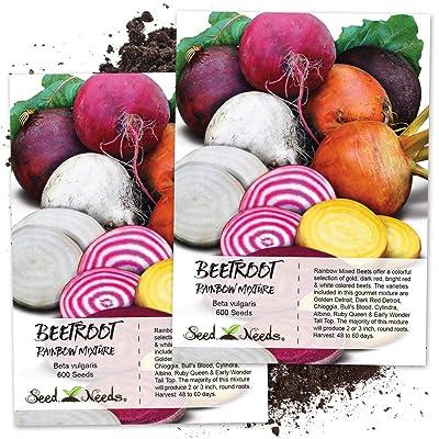 Seed Needs, Rainbow Beet Mixture (Beta vulgaris) Twin Pack of 600 Seeds Each Non-GMO : Garden & Outdoor