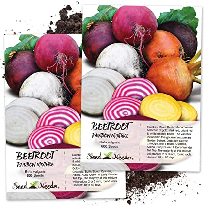 Amazoncom Seed Needs Rainbow Beet Mixture Beta Vulgaris Twin