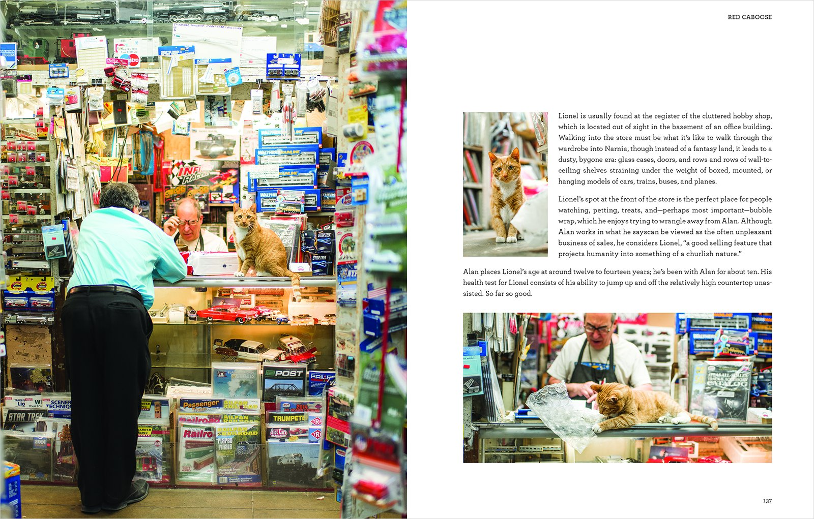 Amazon: Shop Cats Of New York (9780062432025): Tamar Arslanian, Andrew  Marttila: Books