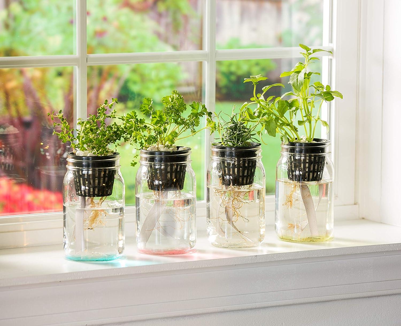 Evergreen Garden Mason - Juego de 4 macetas de cristal autoabsorbentes: Amazon.es: Jardín